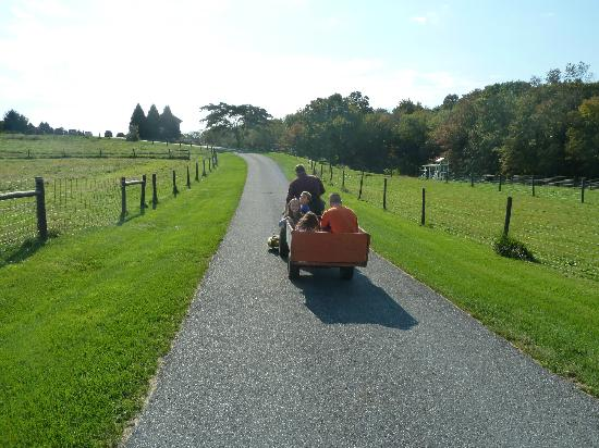 Airy Hill Farm B&amp;B: tractor ride to the barn