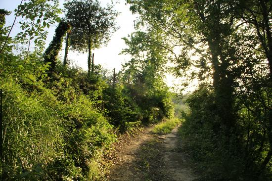 Fattoria Barbialla Nuova: one of the nature trails