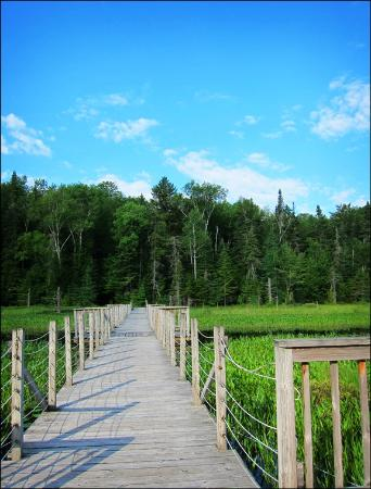 Paul Smiths, Nowy Jork: Floating bridge on the Silviculture Trail
