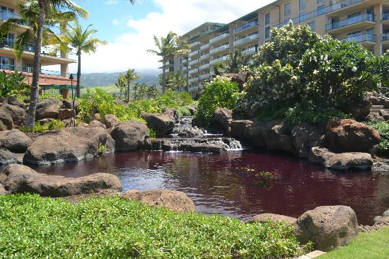 Honua Kai Resort & Spa: Koi Pond at pool