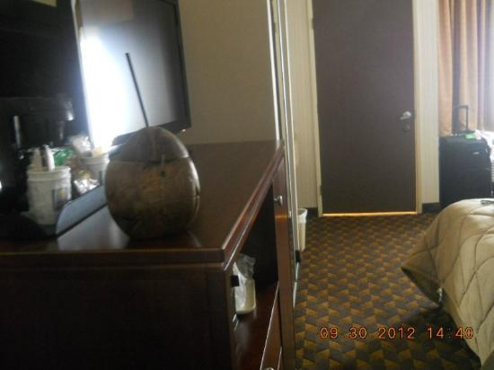 Comfort Inn & Suites LAX Airport: Suite flat/wide screen t.v (ignore coconut, that's ours)