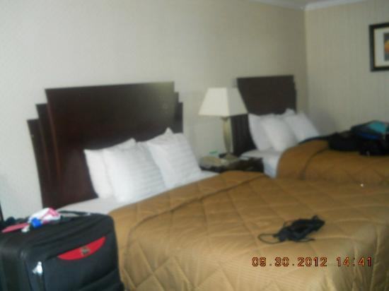 Comfort Inn & Suites LAX Airport: Comfortable queen beds
