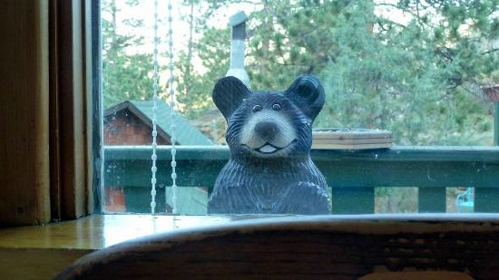 Barbara's B&B: bear watching :-)
