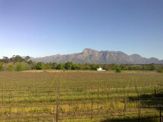 Vrede en Lust Estate: View from wine tasting
