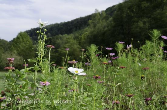 Snug Hollow Farm Bed & Breakfast: Flowers in the meadow