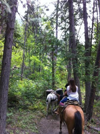 Swan Lake, Монтана: Riding Through the Cedars