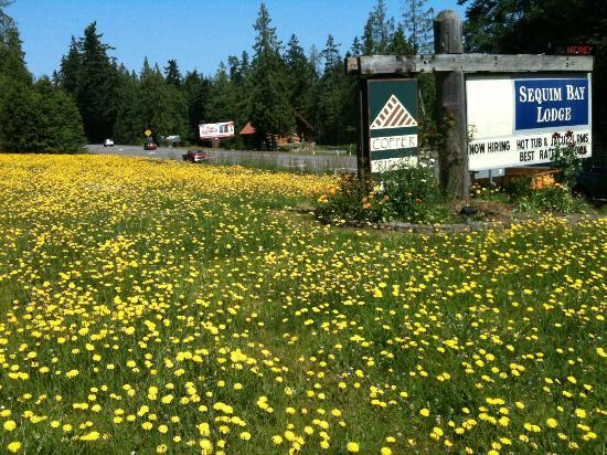 Sequim Bay Lodge: field by the entrance