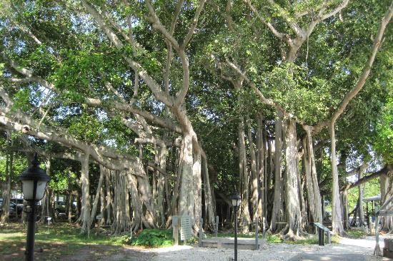 picture of edison ford winter estates fort myers tripadvisor. Cars Review. Best American Auto & Cars Review