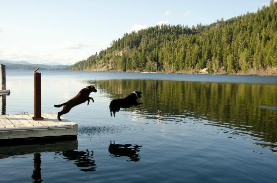 Coolin, ID: Dogs on dock
