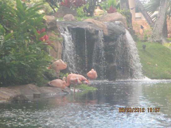 Westin Maui Resort And Spa: Waterfall