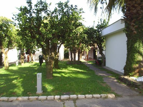 Esperidi Resort: Beautiful lemon and orange trees