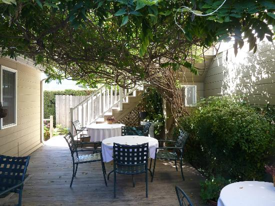 Bath Street Inn: Patio deck covered by Wisteria vines