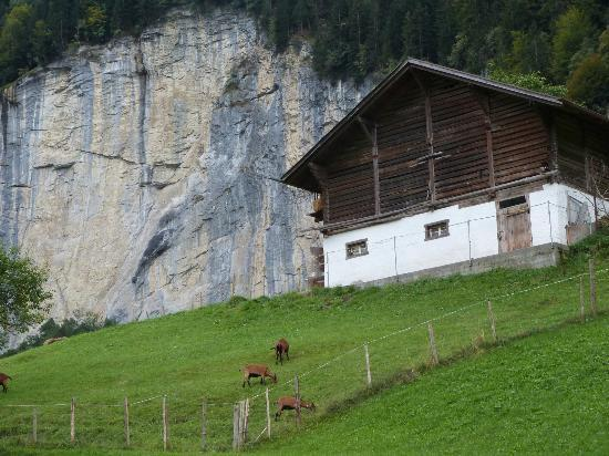 Hotel Silberhorn: Little barn behind the annex