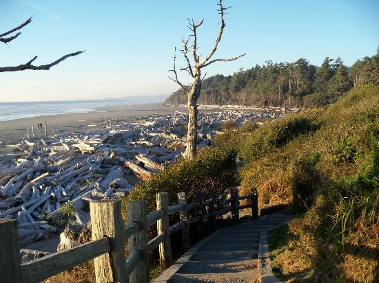 Kalaloch Lodge: Beach