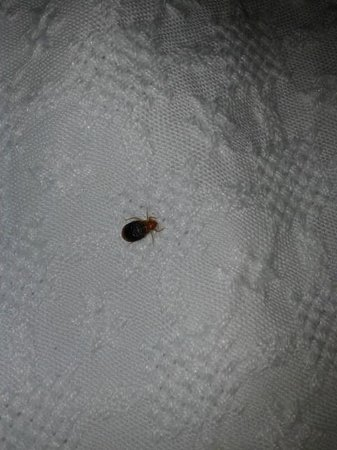 HCC Covadonga:                   One of the bugs in the bed