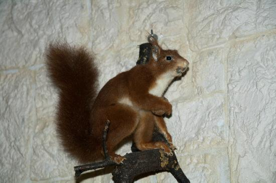 Tours-sur-Marne, Frankrike: Squirrel