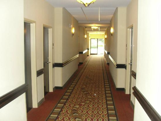 Holiday Inn Express & Suites Tampa USF-Busch Gardens: Hall to Reception