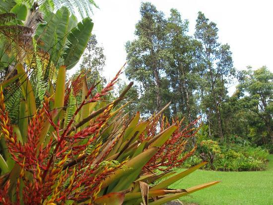 Hale Moana Bed & Breakfast: the grounds - 3