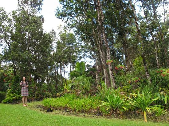 Hale Moana Bed & Breakfast: the grounds - 2