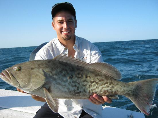 Gag grouper good eating picture of absolute flats for Best florida fish to eat