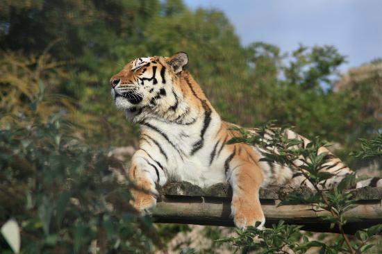 Canterbury, UK: TIGER