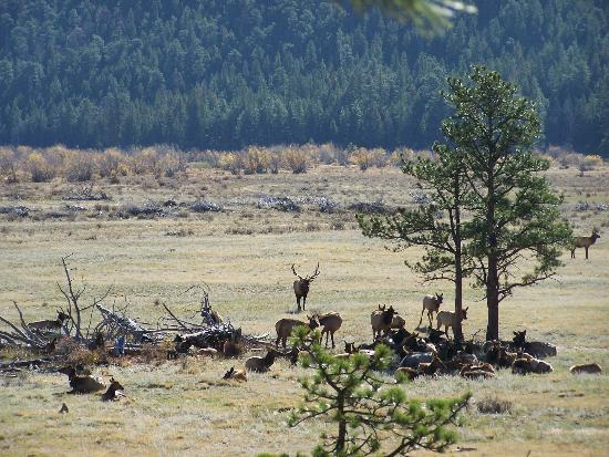 Cub Lake Trail: elk