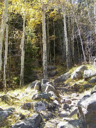 Cub Lake Trail: steep trail through the aspens