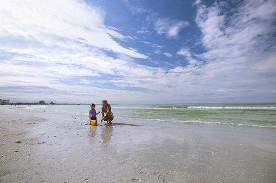Guy Harvey Outpost, a TradeWinds Beach Resort: Looking for Seashells on St. Pete Beach