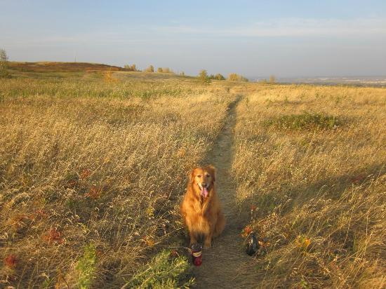 Nose Hill Dog Park
