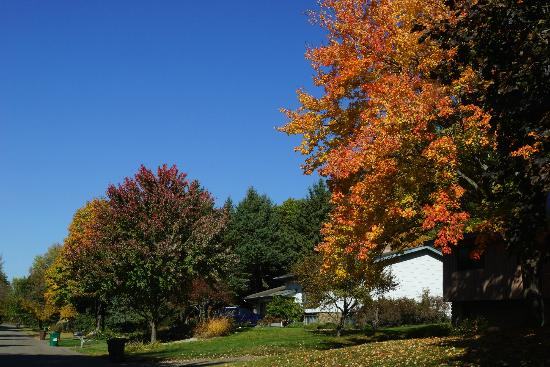 Lexington Inn &amp; Suites of Stillwater / Minneapolis: Fall colors along street in Lake Elmo