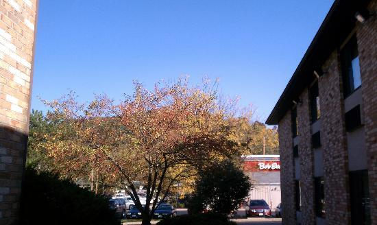 Baymont Inn &amp; Suites Athens: Changing leaves.