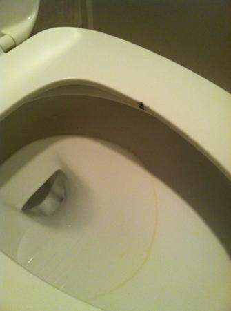 Econo Lodge West: dirty toilet upon check in