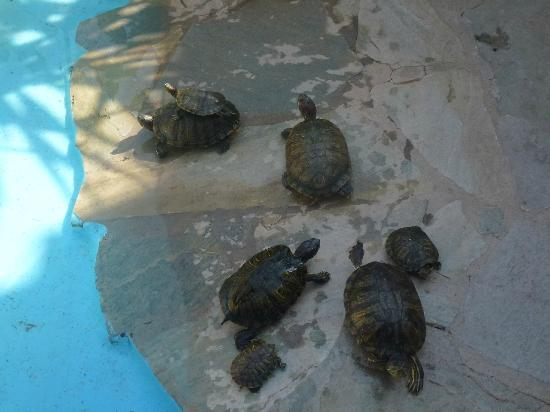 Blondie the Tortoise - Picture of Aquaworld Aquarium ...