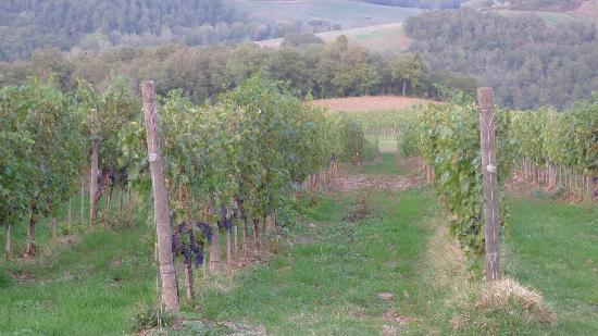 Terre di Nano: Vineyards