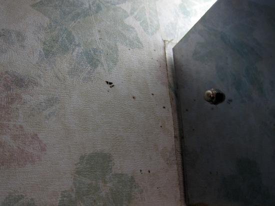 BEST WESTERN Staunton Inn: Mold near the front door