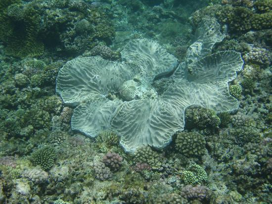 Eratap Beach Resort: Coral off main beach