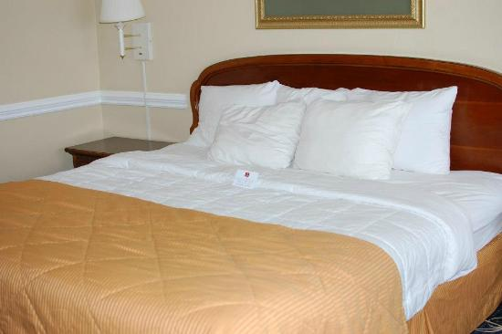 Clarion Inn & Conference Center : King Sized Bed