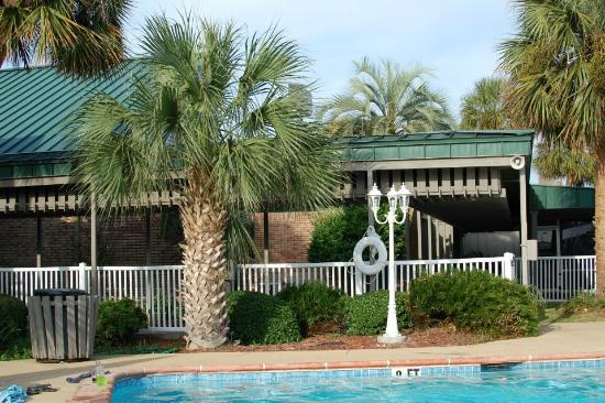Clarion Inn & Conference Center : Palm at Pool