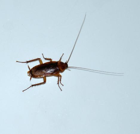 Travelodge Albuquerque East: scary roaches found in bathroom