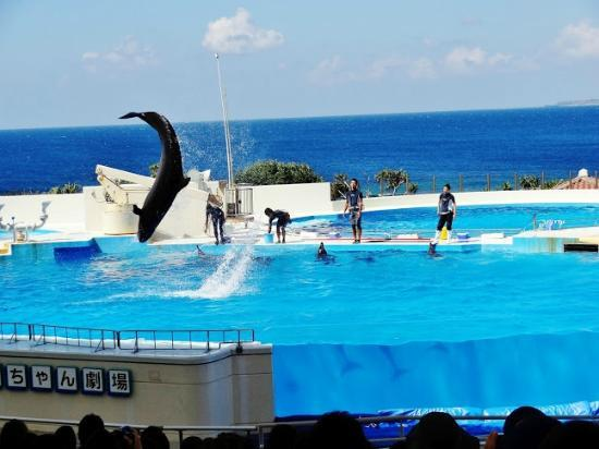 大水槽 - Picture of Okinawa Churaumi Aquarium, Motobu-cho - TripAdvisor