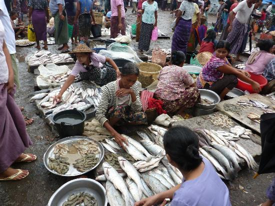Fish market sittwe myanmar address attraction reviews for Fish market ct