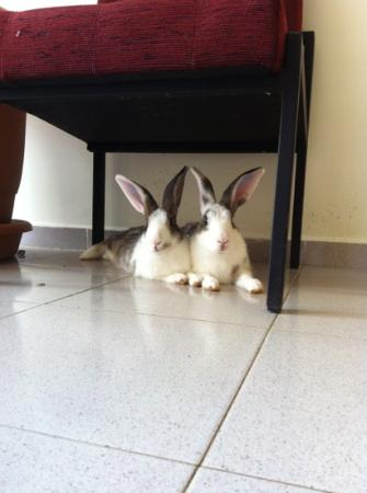 Sahin Palace: the bunnies
