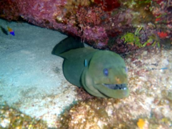 Tranquilseas Eco Lodge and Dive Center: Scuba Diving Eel