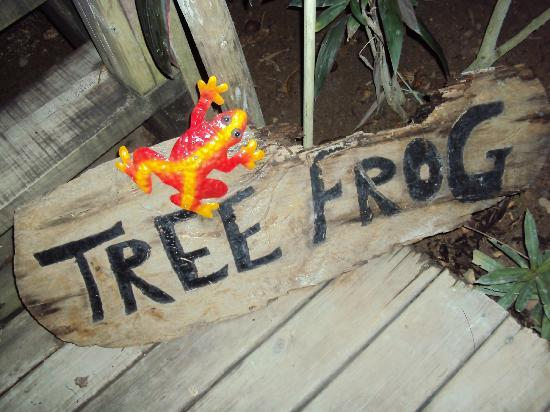 Tranquilseas Eco Lodge and Dive Center: Tree Frog