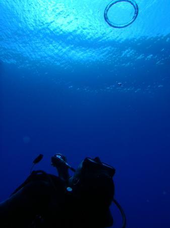 Tranquilseas Eco Lodge and Dive Center: Scuba Diving
