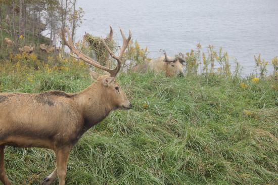The Wilds: some friends hanging around the lake
