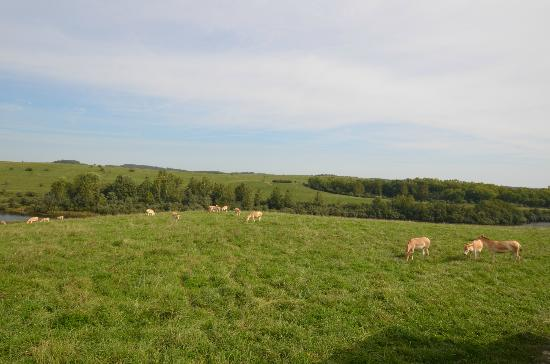The Wilds: Lush Lovely Landscapes!