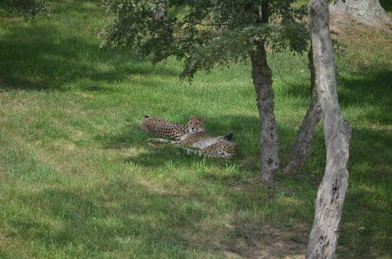 The Wilds: Lazy Summer Nap