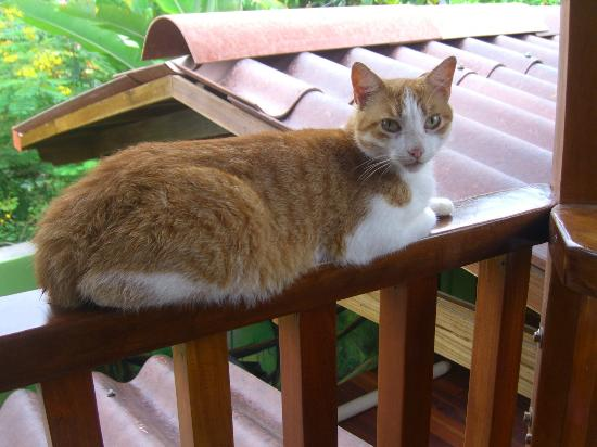 Physis Caribbean Bed & Breakfast: Lucy, the newest addition to the Physis Family
