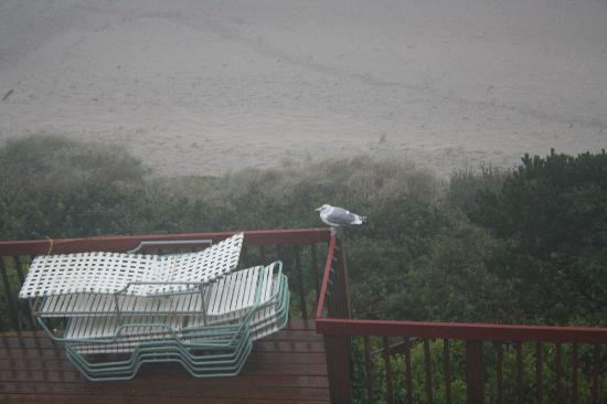 Nordic Oceanfront Inn: seagull stayed on the deck for quite awhile